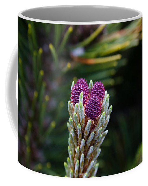 Pine Cone Coffee Mug featuring the photograph Pine Cone Buds by John Daly