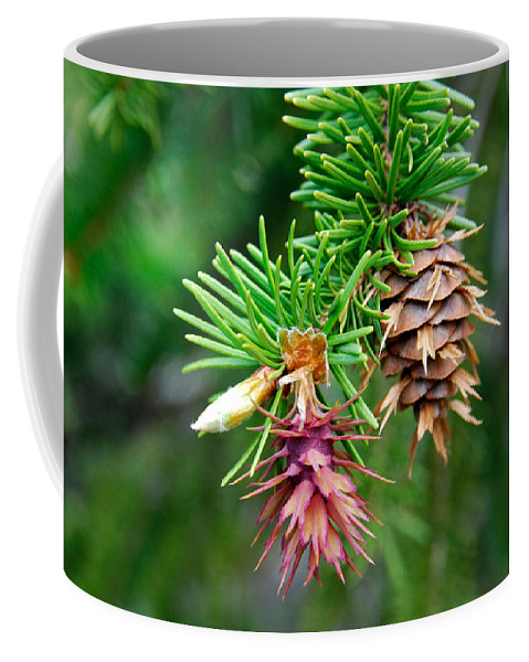 Pine Cone Stages Coffee Mug featuring the photograph Pine Cone Stages by Robert VanDerWal
