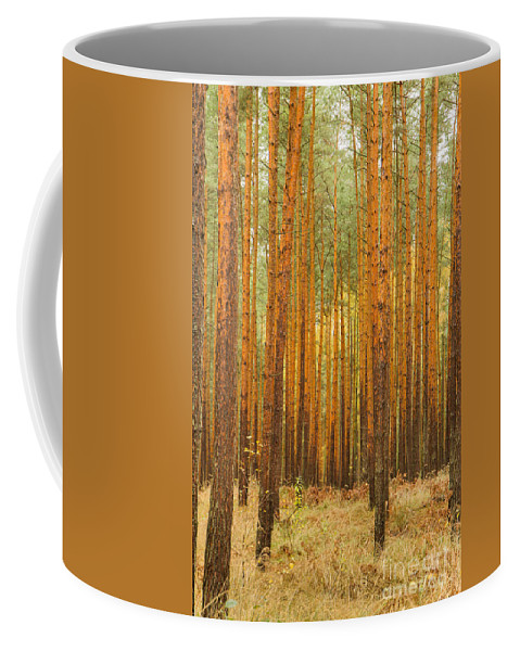 Pine Trees Coffee Mug featuring the photograph Pine Forest by Jivko Nakev