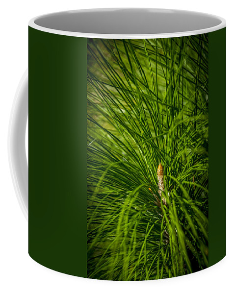 Pine Trees Coffee Mug featuring the photograph Pine Needles by Marvin Spates