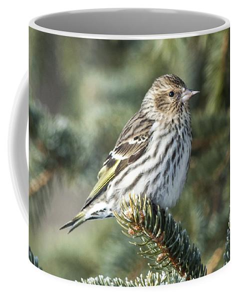 Pine Coffee Mug featuring the photograph Pine Siskin by Richard Kitchen