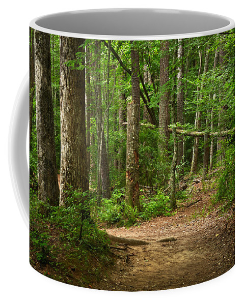 Landscapes Coffee Mug featuring the photograph Pinewood Path by Matthew Pace