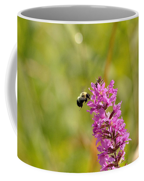 Bee Coffee Mug featuring the photograph Pink And Gold by David Porteus