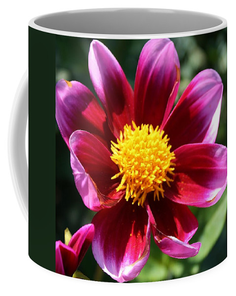 Flora Coffee Mug featuring the photograph Pink And Red Dahlia by Bruce Bley