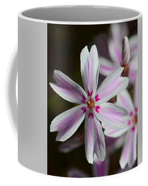 Flower Coffee Mug featuring the photograph Pink And White by Robert Mitchell