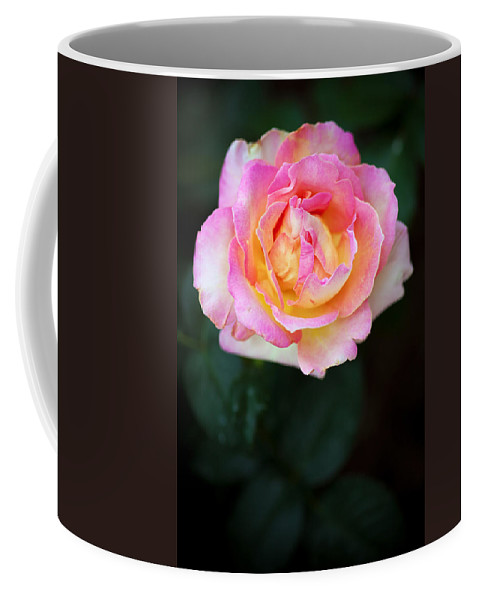 Bumble Bee Coffee Mug featuring the photograph Pink And Yellow Rose by Sennie Pierson