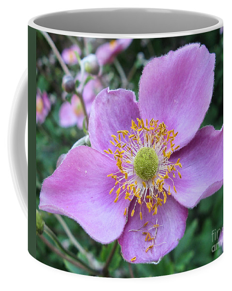 Flowers Coffee Mug featuring the photograph Pink Anemone Flower by Jack Schultz