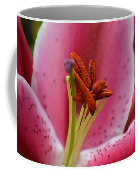 Pink Asiatic Abstract Coffee Mug featuring the photograph Pink Asiatic Abstract by Maria Urso