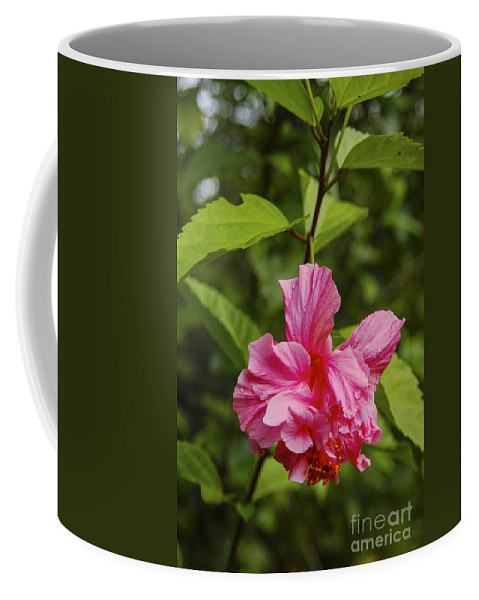 Arenal Volcano Region Costa Rica Tropical Flower Flowers Plant Plants Leaf Leaves Nature Camellia Coffee Mug featuring the photograph Pink Camellia by Bob Phillips