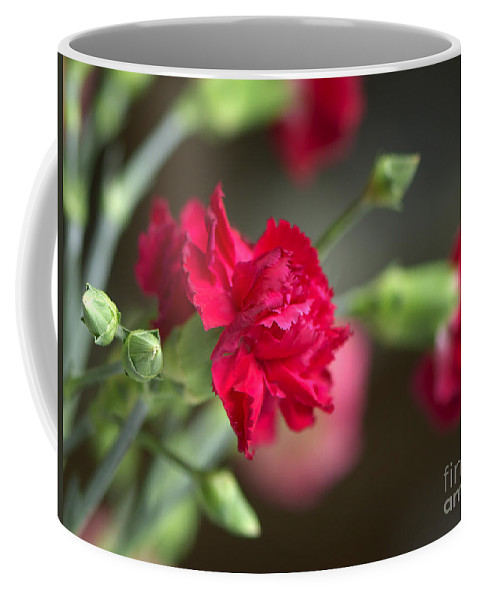 Pink Carnation Coffee Mug featuring the photograph Pink Carnation by Sharon Talson