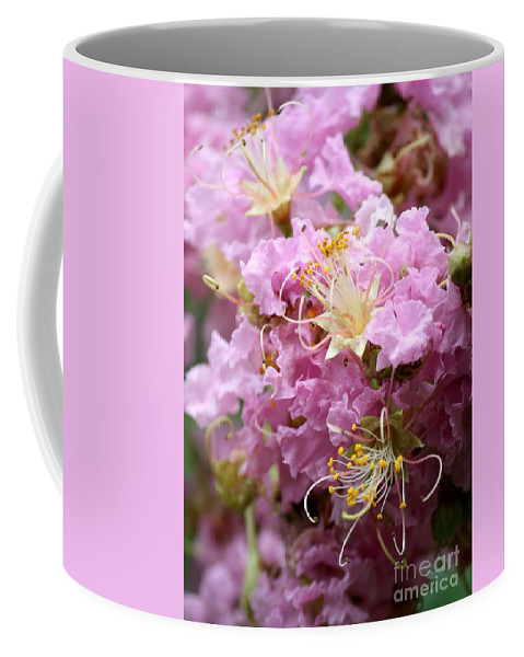 Lagerstroemia Coffee Mug featuring the photograph Pink Crepe Myrtle Closeup by Carol Groenen