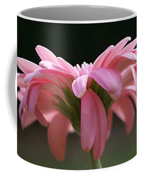 Pink Coffee Mug featuring the photograph Pink Daisy 1 by Carol Lynch