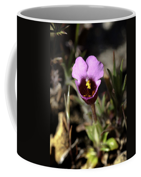 Pink Coffee Mug featuring the photograph Pink Flower by Betty Depee