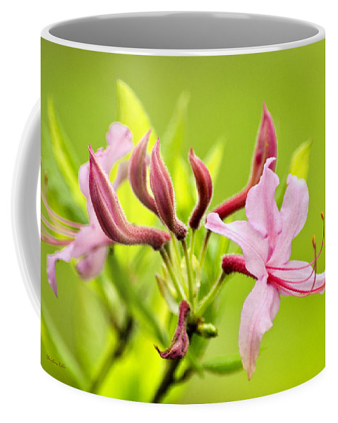 Honeysuckle Coffee Mug featuring the photograph Pink Honeysuckle Flowers by Christina Rollo