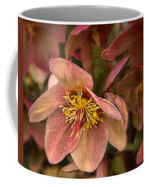 Roses Coffee Mug featuring the photograph Pink Lenten Rose by Mel Hensley