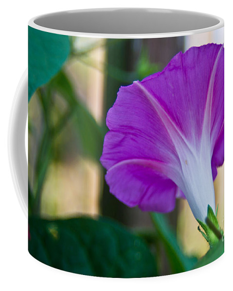 Pink Coffee Mug featuring the photograph Pink Morning Glory by Scott Hervieux