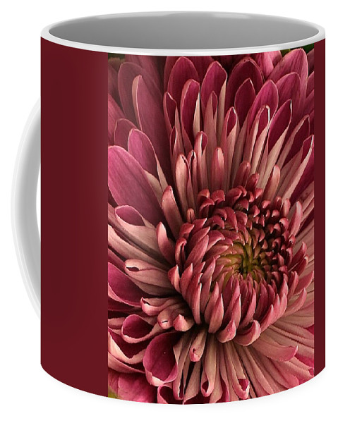 Flora Coffee Mug featuring the photograph Pink Mum by Bruce Bley