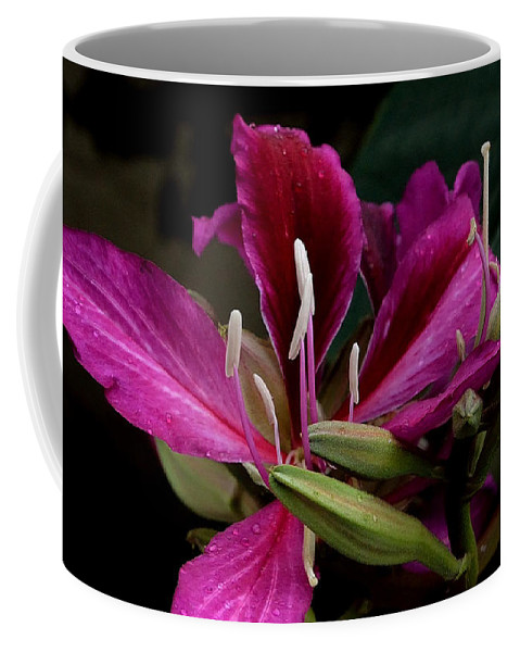 Hong Kong Orchid Coffee Mug featuring the photograph Pink Passion by Lorraine Harrington