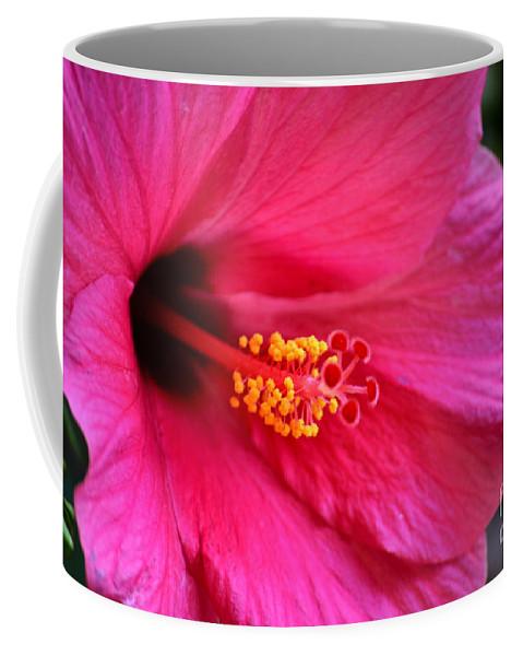 Deb Halloran Coffee Mug featuring the photograph Pink Perfection by Deb Halloran