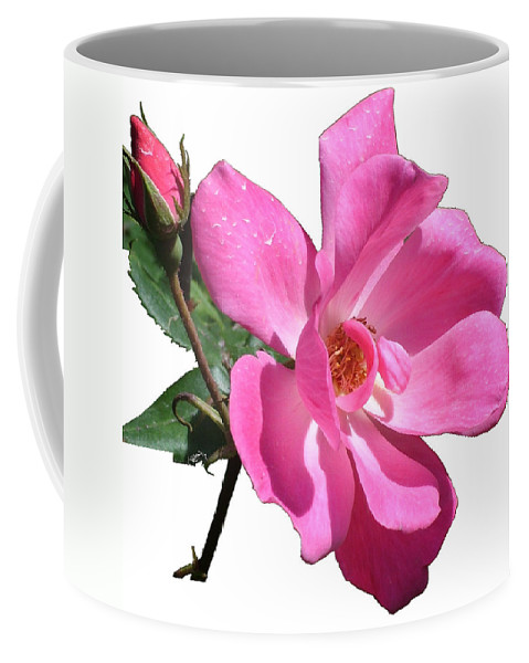 Pink Coffee Mug featuring the photograph Pink Rose With Bud by Geoffrey McLean