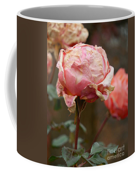 Floral Coffee Mug featuring the photograph Pink Roses In The First Snow by Rowena Throckmorton