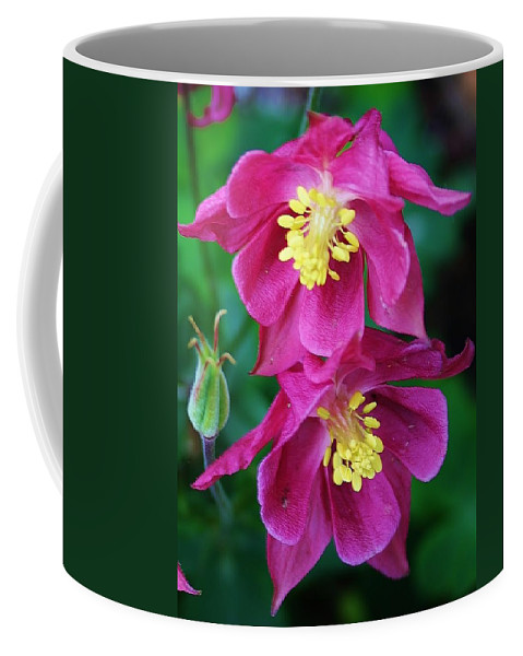 Flora Coffee Mug featuring the photograph Pink Sensations Columbine by Bruce Bley