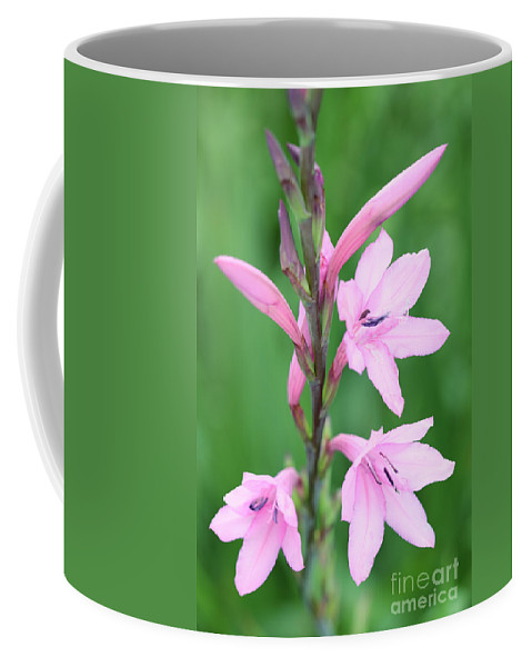 Pink Watsona Watsonia Borbonica Iris Family Flower Flora Floral Pink Red Green Macro Flowering South Africa African Coffee Mug featuring the photograph Pink Watsona by Neil Overy