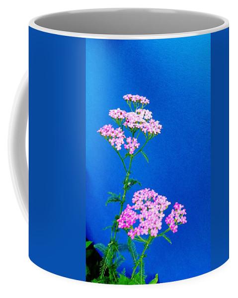 Pink Yarrow Coffee Mug featuring the photograph Pink Yarrow by Mike Breau