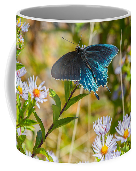 Pipevine Swallowtail Coffee Mug featuring the photograph Pipevine Swallowtail On Asters by John Haldane