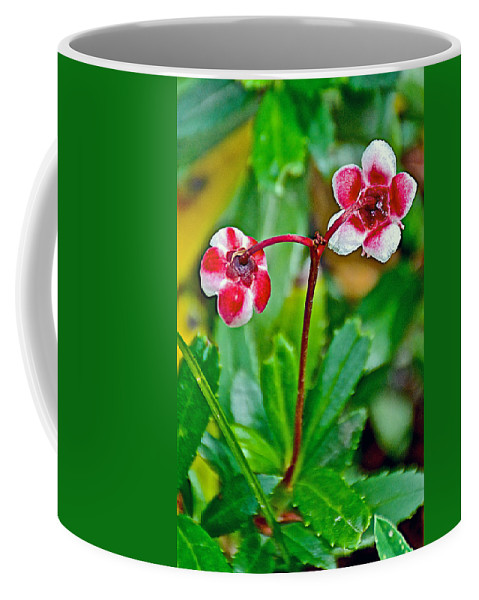 Pipsissewao Trail To Swan Lake In Grand Teton National Park Coffee Mug featuring the photograph Pipsissewa On Trail To Swan Lake In Grand Teton National Park-wyoming by Ruth Hager
