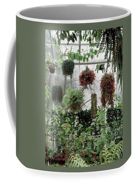 Plants Hanging In A Greenhouse Coffee Mug