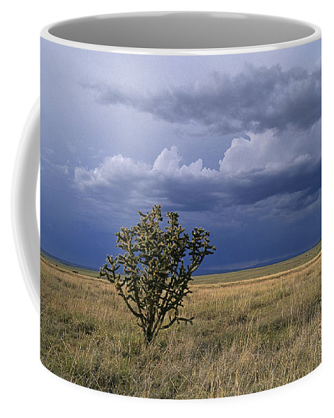 New Mexico Coffee Mug featuring the photograph Plateau Cholla New Mexico by Buddy Mays