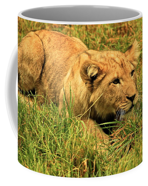Lion Coffee Mug featuring the photograph Playing With The Siblings by Laddie Halupa