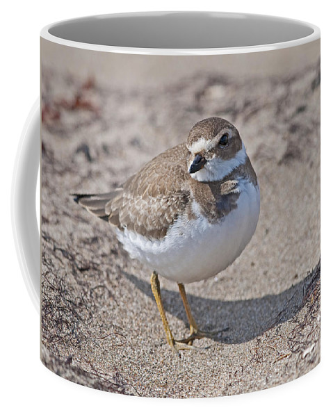 Festblues Coffee Mug featuring the photograph Plover Lover.. by Nina Stavlund