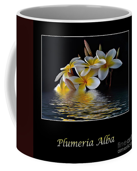 Photography Coffee Mug featuring the photograph Plumeria Alba by Kaye Menner