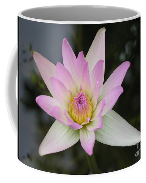 Pointed Pink Lily Coffee Mug featuring the photograph Pointed Pink Lily by Mary Deal