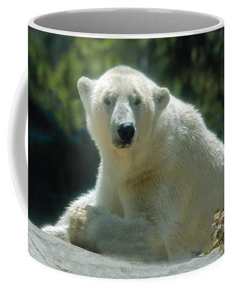 Polar Bear Coffee Mug featuring the photograph Polar Bear Portrait by William Bitman