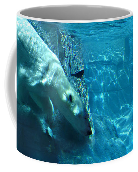 Wild Life Coffee Mug featuring the photograph Polar Bear by Steve Karol