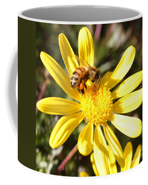 Bee Coffee Mug featuring the photograph Pollen-laden Bee On Yellow Daisy by Carol Groenen