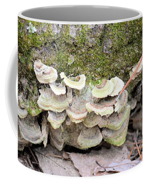 Polypore Abstract Coffee Mug featuring the photograph Polypore Abstract by Maria Urso