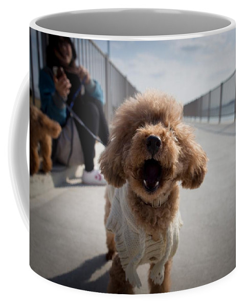 Dog Coffee Mug featuring the photograph Poodle Dog by FL collection