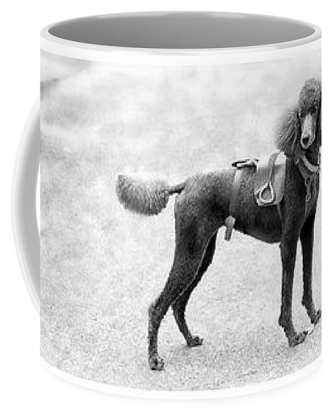 Poodle Coffee Mug featuring the photograph Poodle Jockey Triptych by Alice Gipson