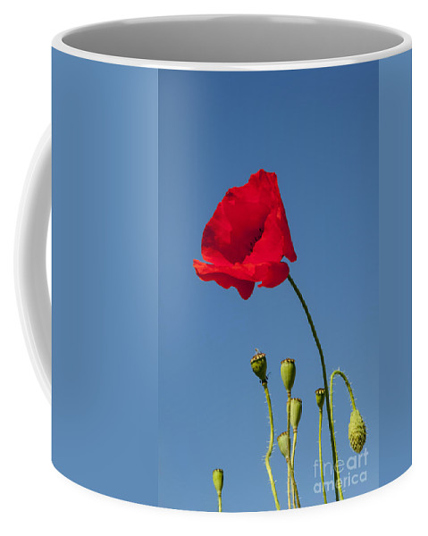 Georgetown Texas Red Poppy Poppies Flower Flowers Plant Plants Spring Coffee Mug featuring the photograph Poppy And Buds by Bob Phillips