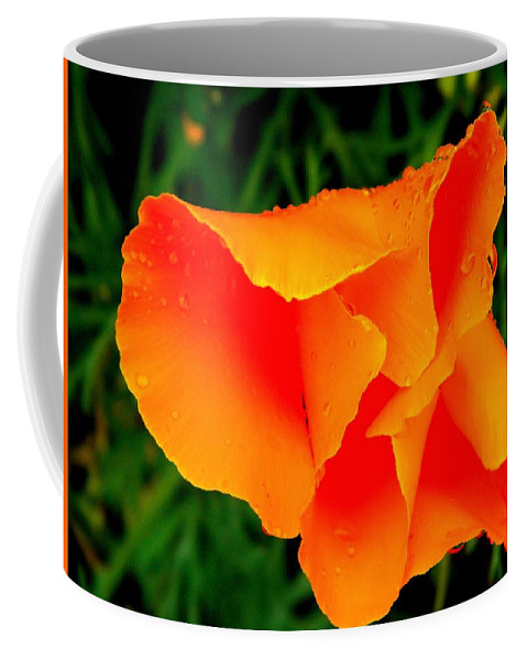 Poppy Coffee Mug featuring the photograph Poppy Dew by Chris Berry