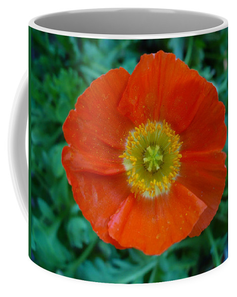 Floral Coffee Mug featuring the photograph Poppy by Nicki Bennett