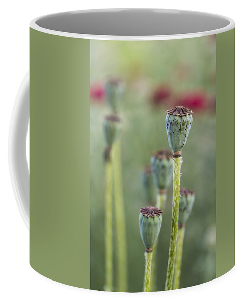 Spring Coffee Mug featuring the pyrography Poppy Pods by Karen Forsyth