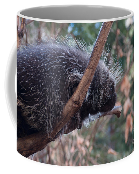 Porcupine Coffee Mug featuring the photograph Porcupine by Bianca Nadeau