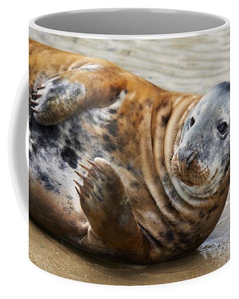Portrait Coffee Mug featuring the photograph Portrait Of A Common Seal by Nick Biemans