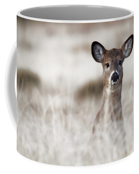 Deer Coffee Mug featuring the photograph Portrait Of A Fawn by Jim Garrison