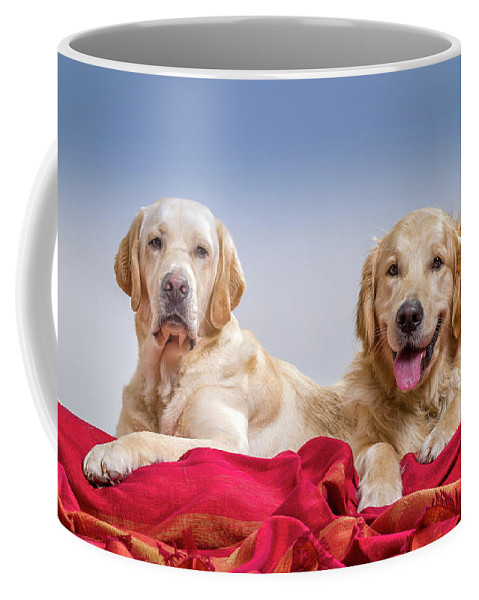 Photography Coffee Mug featuring the photograph Portrait Of A Golden Retriever by Animal Images